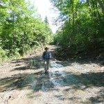 Recently cleared logging road
