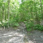 Left fork #3 to overgrown trail