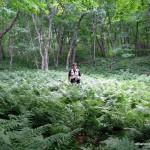 Dan in the fern forest