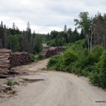 Old logs stacked alongside Sonny Lake Road