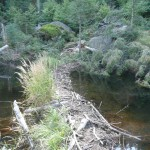 Beaver dam crossing over Talus Lake