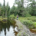 Dan crossing a beaver dam