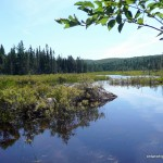 Beaver Pond at the end of the ATV trail