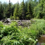 Different perspective of the beaver dam