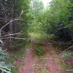 Overgrown ATV trail