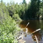 Beaver Dam - Crossing