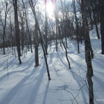 Algoma Winter Forest