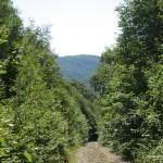 View at the start of the bushwhack along Mamainse Road