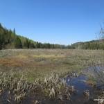 Marshlands east of Labelle Lake