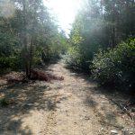 Quad path
