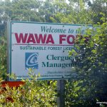 Welcome to the Wawa Forest